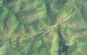 Note the specific travel corridors this cow elk utilizes. Further highlighting the importance of open canopy herbaceous habitat.